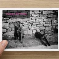 happy birthday card of dogs at a tie up