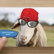 Welsh sheep card