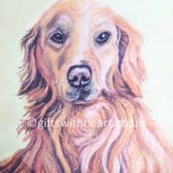 golden retriever pastel picture for sale