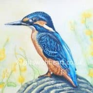kingfisher watercolour painting for sale