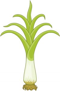 welsh leek as the national symbol of Wales